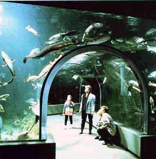 Grandi acquari acquario ocearium du croisic for Acquario tartarughe grandi