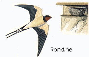 Untitled document for Rondine in inglese
